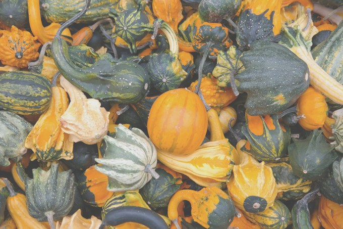 gourds_thanksgiving_volunteering